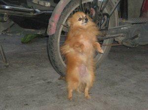 Cute little dog!